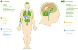 articles-endocannabinoid-system_text_2