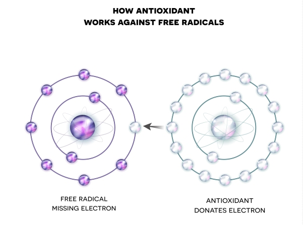 How Antioxidant Works Against Free Radicals. Antioxidant Donates